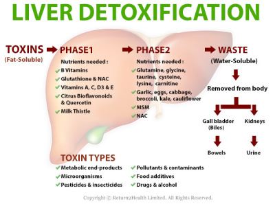 hepatic detoxification